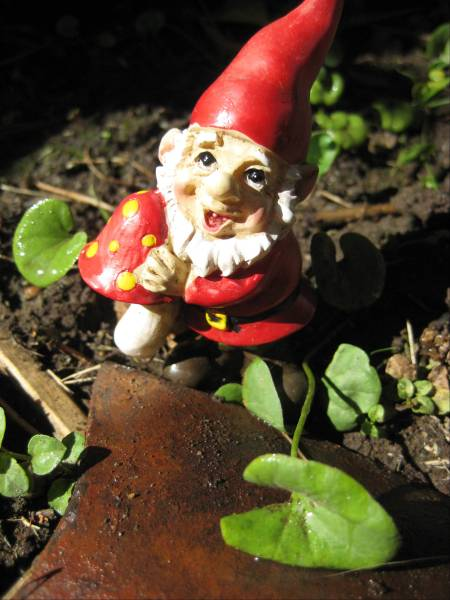 gnomewbroken-potb